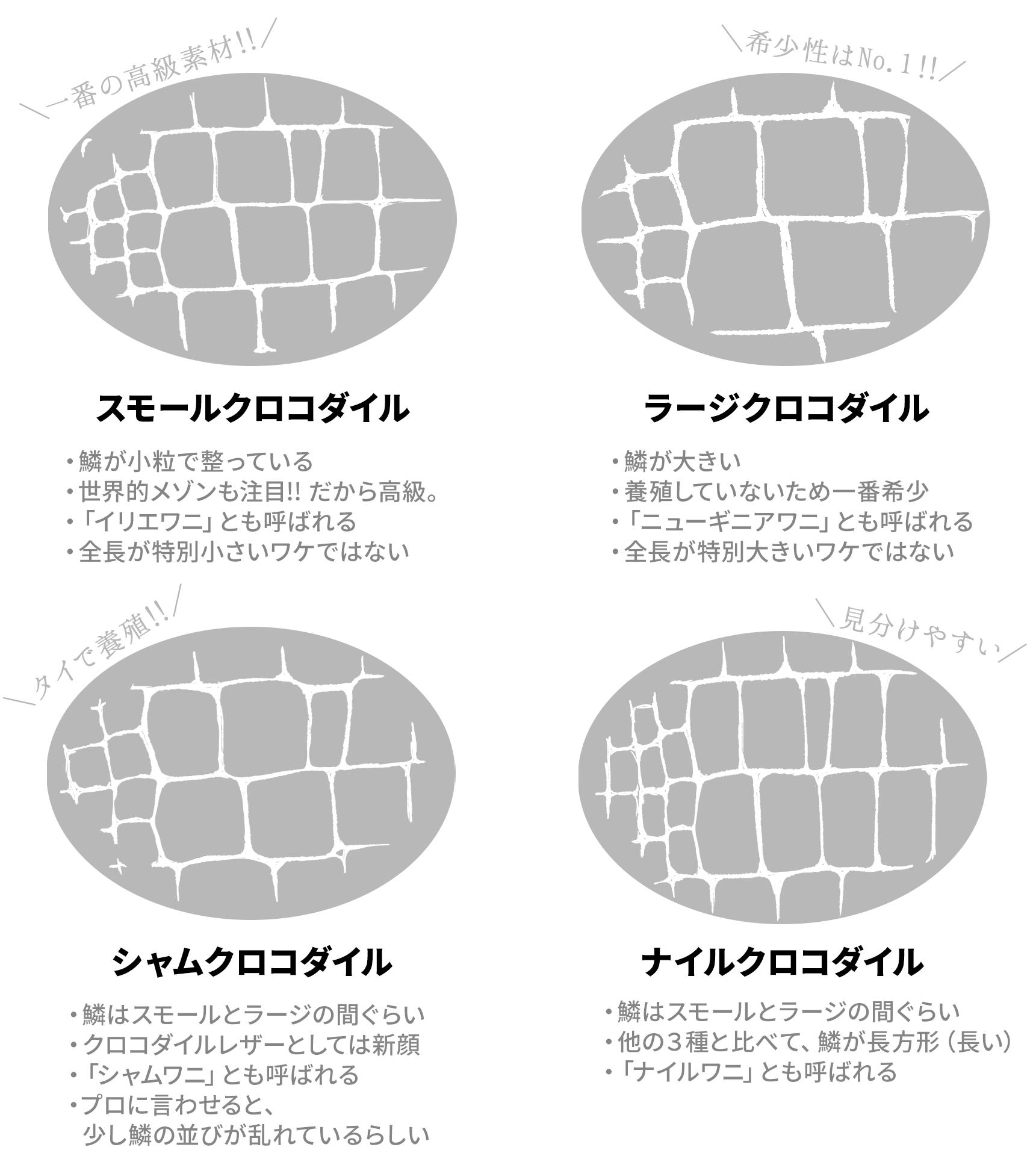 【クロコダイル①:スモールクロコダイル】斑(ふ)の形が小粒で整っており、そのためクロコダイルの中で最も高級素材とされている。世界的メゾンがこぞって使用していることも価格高騰の一因。イリエワニやポロサスとも呼ばれる。スモールと名前にあるが、全長に対して斑が小さいというだけの話でスモールサイズのワイというワケではない。【クロコダイル②:ラージクロコダイル】斑の形が大きく、非常に希少な種。価値としてはスモールクロコダイルの方が高いが、希少性はラージクロコダイルの方が上。養殖できず、天然モノをハントしなければならない。ニューギニアワニとも呼ばれる。名前にラージとあるが、ラージサイズのワニというワケではない。あくまでも斑が大きいだけ。【クロコダイル③:シャムクロコダイル】斑の大きさは、スモールクロコとラージクロコの中間ぐらい。クロコダイルレザーとしては後発な種で、タイで主に養殖されている。シャムワニと呼ばれることもある。クロコダイルのプロに言わせると「シャムワニも十分美しいが、スモールクロコと比べてしまうと、少し鱗が騒がしい」とのこと。【クロコダイル④ナイルクロコダイル】他の3種と比べると、明らかに斑が細長い(長方形)であるのが最大の特徴。ナイルワニと呼ばれることもある。